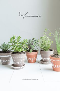 DIY: Herb Planter Pots - Super cute herb labels and designs with acrylic paint! Includes a list of herbs that do well indoors and indoor herb basics.