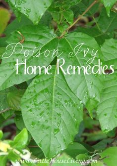 Did you get into a patch of poison ivy this summer? Here is a great list of natural Poison Ivy Home Remedies that you need to keep!