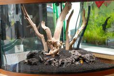 How to scape a corner aquarium? – Aquascaping – Aquatic Plant Central How to scape a corner aquarium? Planted Aquarium, Aquarium Aquascape, Live Aquarium Plants, Aquarium Fish Tank, Fish Tanks, Aquascaping, Reptiles, Corner Aquarium, Manzanita Driftwood