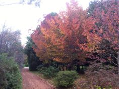 Autumn in the southern Highlands of NSW.