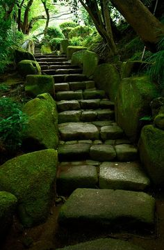 Mossy stairs to Hōkoku-ji Temple in Kamakura,. Mossy stairs to Hōkoku-ji Temple in Kamakura, Japan Kamakura, Beautiful World, Beautiful Places, Stairway To Heaven, Pathways, Stairways, Land Scape, Nature Photography, Scenery