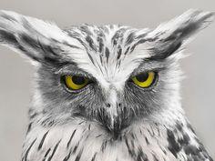 99 excelentes fotografías de pájaros - Taringa!