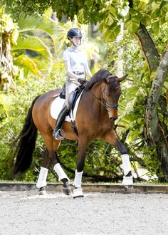 Olivia LaGoy-Weltz and Rassing's Lonoir demonstrate correct dressage work that can increase a horse's longevity and improve his quality of life. (SusanJStickle.com)