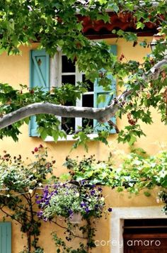 colors -----This Ivy House: Photo