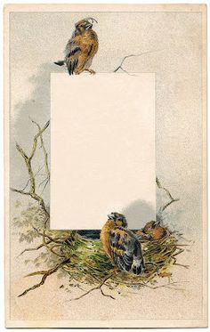 Vintage Graphic - Sweet Birds with Nest - Frame - The Graphics Fairy