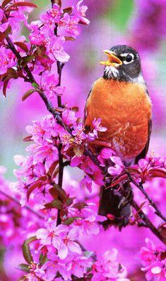 Beautiful bird and flowers too
