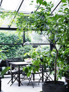 dining room, black-framed conservatory