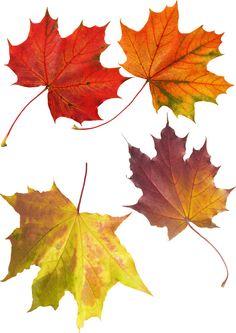 Листья, кожа — Яндекс.Диск Watercolor Sunflower, Watercolor Flowers, Watercolor Paintings, Autumn Art, Autumn Leaves, Maple Leaves, Leaf Drawing, Fall Leaves Drawing, Autumn Inspiration