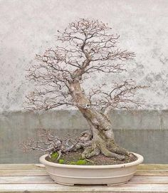 7cad94f8542af651b411e8e1e7cbcf07.jpg (696×800) #bonsaitrees