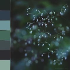 #colorswatches #flora #nature #forest #flower