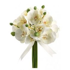 Baby Phalaenopsis Orchid Bouquet