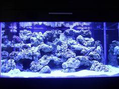 reef aquascaping designs | Your aquascaping pics.