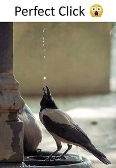 Really very perfect click Stunning Photography, Creative Photography, Wildlife Photography, Levitation Photography, Beautiful Images, Animals Beautiful, Cool Pictures, Cool Photos, Amazing Places On Earth