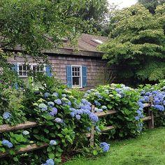 Hampton blues. (And I mean that in a good way.) #hydrangeas #sopretty #cottage #charming #design #garden #hamptons #easthampton #summer…
