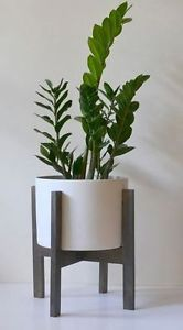 1-X-ZANZIBAR-GEM-200MM-POT-INDOOT-PLANTS-GARDEN-TALL-LARGE-SUCCULENT-KIT