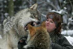 trust and respect  (Tanja Askani and her gray wolves)