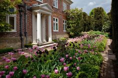 Clinton Lodge Tulip flower beds NGS Gardens open for charity - Garden