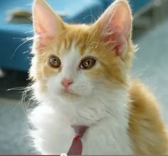 OMG so many kittens Right Meow, Best Commercials, I Love Cats, People Like, All About Time, Kittens, Cute, Animals, Watch