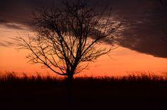 Solitude Sunset Illinois