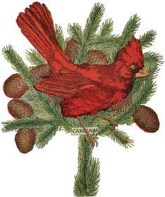 Holiday Cardinal Image