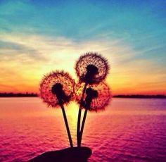 Cute #paradise