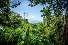 18 Lapa Rios Ideas Rio Costa Rica Rainforest