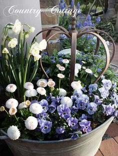 My Country Cottage Garden. Beautiful zinc planter with narcissus, forget me not, bellis perennis & violas. ❤️