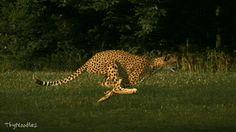 Puma Energy El Paraiso Leon Nicaragua | Pumas D' corazon