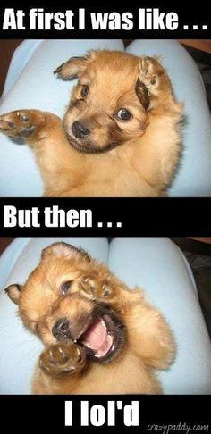 cute #funny #dog