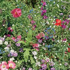 Shade Wildflower Mix