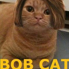 I had to repin this...it's the funniest thing I've seen in a long time!