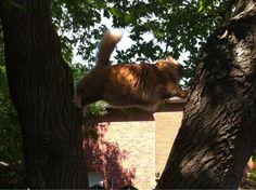 5 Kuvaa kissoista jotka jäivät jumiin erikoisiin paikkoihin