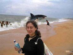 el tiburón, salta del agua, quiere comer/tiene hambre, está distraída, no sabe qué está pasando - What's happening?