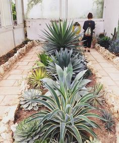 How To Use Succulent Landscape Design For Your Home Succulent Landscaping, Home Landscaping, Landscaping With Rocks, Front Yard Landscaping, Succulents Garden, Succulent Planters, Succulent Arrangements, Hanging Planters, Front Garden Landscape