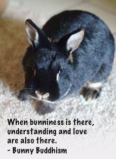 Story of Bunniness: Koucha – Bunny Buddhism Funny Bunnies, Cute Bunny, Bunny Rabbit, Animals And Pets, Baby Animals, Funny Animals, Cute Animals, Lana Banana, Bunny Rescue