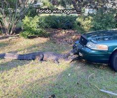 Gators win!