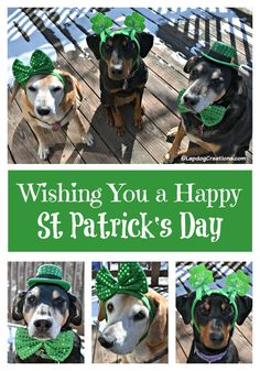 Wishing Your a Happy St Patrick's Day ©LapdogCreations Dog Mom   Rescue Dog   Dog Products   St Patrick's Day   Life with Dogs
