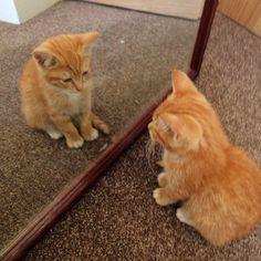 cute ginger kitten 5 lessons learned from a new kitten - on my blog www.janmary.com #cat #kitten #cute #ginger #gingerkitten