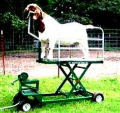 Goat Stand Chariots and Fitting Stands on Wheels