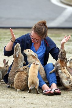"""zenaxaria: """" lost-and-found-box: """" There's a small island in Japan called Okunoshima with thousands of adorable rabbits! Wild Rabbit, Fox And Rabbit, Animals And Pets, Baby Animals, Cute Animals, Rabbit Island, White Rabbits, Bunny Rabbits, Music Artwork"""