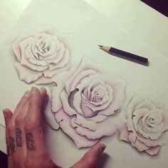 nicely sketched roses