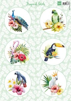 Vk9561 Knipvel Tropical birds