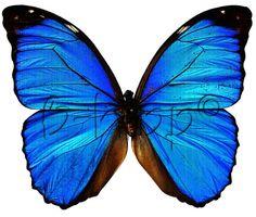 full color strijkapplicatie vlinder blauw