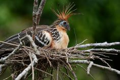 Rating may help drive efforts to save some of Earth's most critically endangered (and weirdest) birds.