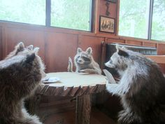 Coon poker
