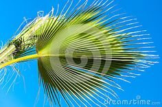 Green background of palm leaves. Lines and shadows pattern isolated on blue sky.