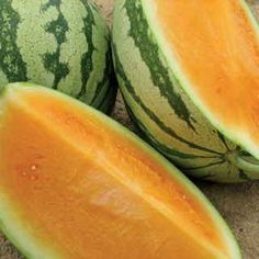 92 days. If you've never grown an orange watermelon before, Orange Crisp Hybrid is going to spoil you for every other variety! It's simply better in every way, from flavor (oh-so-sweet!) to holding ability (lengthy!) to vigor (big yields every time). Try this seedless gourmet delight for just one season, and we predict it will become your go-to melon!Orange Crisp lives up to its name with bright to amber-tinged orange flesh of exceptional crispy-sweet texture and flavor. The aroma is ...