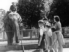 An elephant takes a drink from a tap at the Melbourne Zoo. Melbourne Zoo, Melbourne House, Air Raid, St Kilda, Slums, Photo Essay, Historical Photos, Cathedral, Elephant