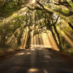 Edisto Island, South Carolina The road through the old Botany Bay plantation is lined by live oaks draped with Spanish moss. It's just a small part of the ecosystem on Edisto Island, one of the many Sea Islands along the southeast coast of the U. All Nature, Amazing Nature, Beautiful World, Beautiful Places, Romantic Places, Romantic Nature, Beautiful Forest, Beautiful Scenery, Amazing Places