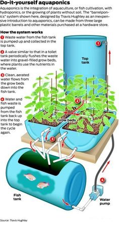 Very basic aquaponics set up - Barrelponics by Travis Hughley - LINK HAS BEEN FIXED - it now goes to the website of the owner of this image, you can download info for free from them.